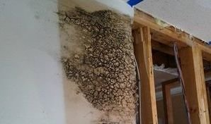 Mold Infestation Found Behind A Wall
